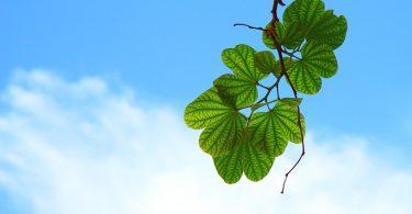 Göklerin ve Yerin Rabbi | Ha-Mim