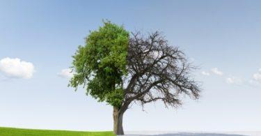 Agnostisizm (Bilinemezcilik): ''İnanç''ın ''Ümit''e Dönüşmesi | Ha-Mim
