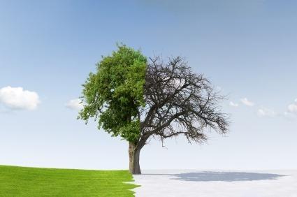 Agnostisizm (Bilinemezcilik): ''İnanç''ın ''Ümit''e Dönüşmesi   Ha-Mim