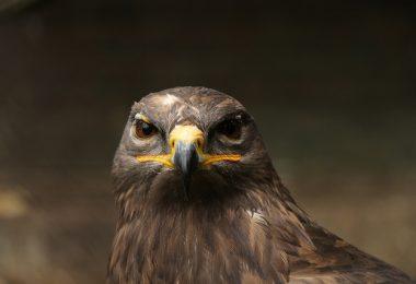 Bize Kuş Dili Öğretildi | Ha-Mim