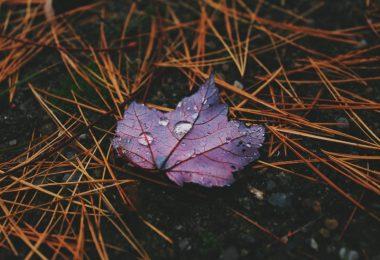 Delil-i İhtira: Her An Orijinalliğini Gözlemlediğimiz Yaratılış - VII | Ha-Mim