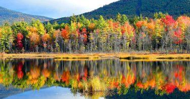 Melekler 4: Ağaçtaki Mana ve Melekûtiyet | Ha-Mim