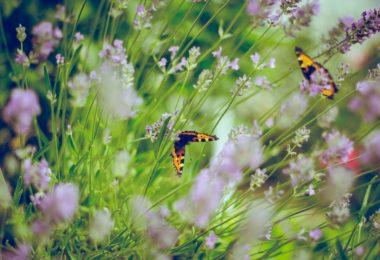Peygambersiz Hayat Anlamsız Olurdu -II- | Ha-Mim