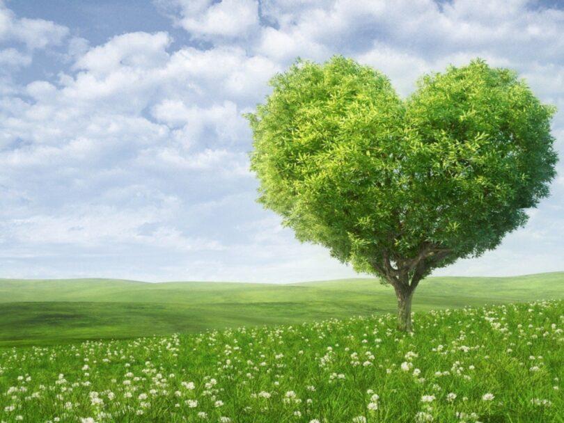 Mutlak Kemal ve Vücud ile Mahluk Vücudların Arasındaki İlişki Üzerine | Ha-Mim
